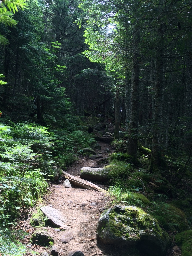 Heading up the Jewell Trail